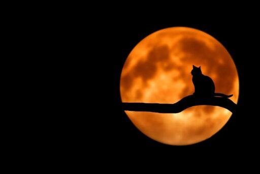 Wicca: Fasi lunari ed incantesimi